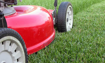 Lawn Care in Salisbury MD Lawn Care Services in Salisbury MD Quality Lawn Care in Salisbury MD