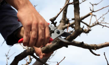 Tree Pruning in Salisbury MD Tree Pruning Services in Salisbury MD Quality Tree Pruning in Salisbury MD