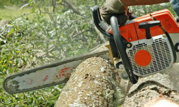 Tree Removal in Salisbury MD Tree Removal Quotes in Salisbury MD Tree Removal Estimates in Salisbury MD Tree Removal Services in Salisbury MD Tree Removal Professionals in Salisbury MD Tree Services in Salisbury MD