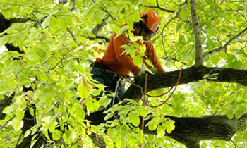 Tree Trimming in Salisbury MD Tree Trimming Services in Salisbury MD Tree Trimming Professionals in Salisbury MD Tree Services in Salisbury MD Tree Trimming Estimates in Salisbury MD Tree Trimming Quotes in Salisbury MD