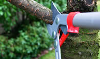 Tree Pruning Services in Salisbury MD