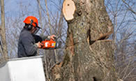 Tree Removal in Salisbury MD